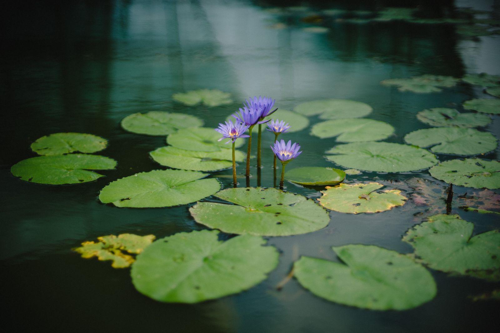 Bloemen in de vijver